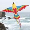 latawiec-bird-dragon-rainbow
