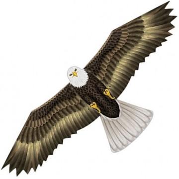 Birds of Prey Eagle
