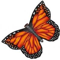 latawiec-x-kites-butterfly-kites-monarch