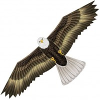 latawiec-birds-of-prey-eagle
